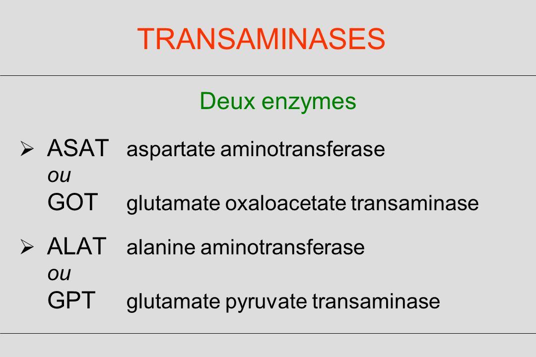 TRANSAMINASES Deux enzymes ASAT aspartate aminotransferase ou