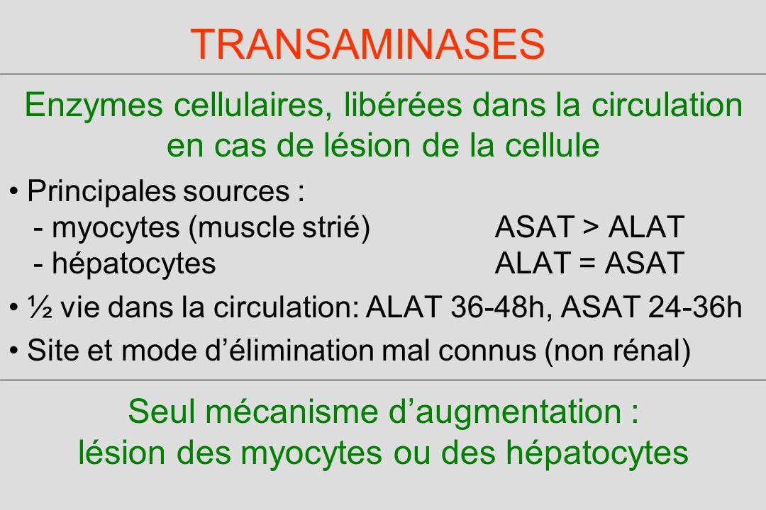 TRANSAMINASES Enzymes cellulaires, libérées dans la circulation