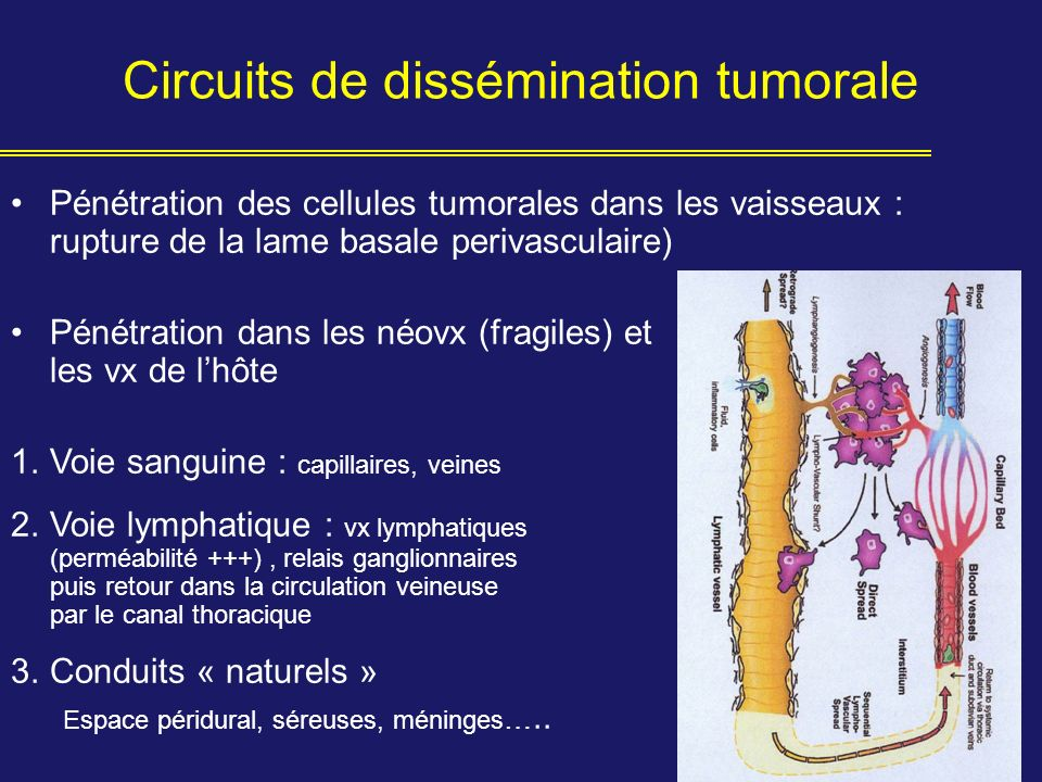 Circuits de dissémination tumorale
