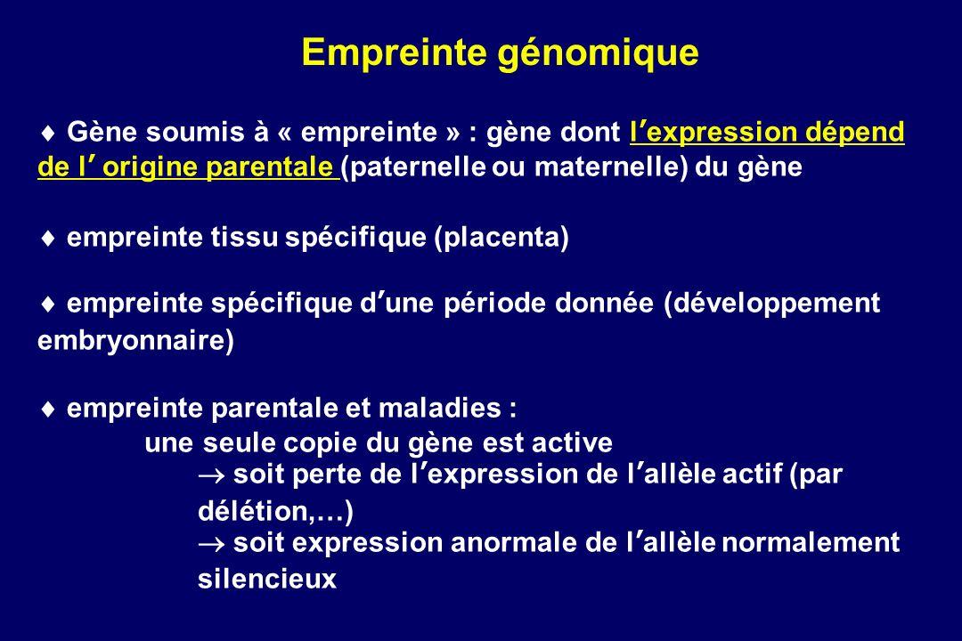 Empreinte génomique  Gène soumis à « empreinte » : gène dont l'expression dépend de l' origine parentale (paternelle ou maternelle) du gène.