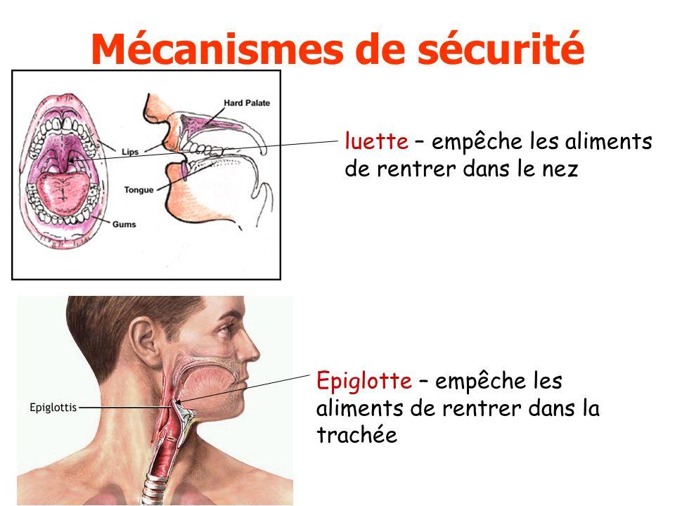 Mécanismes de sécurité