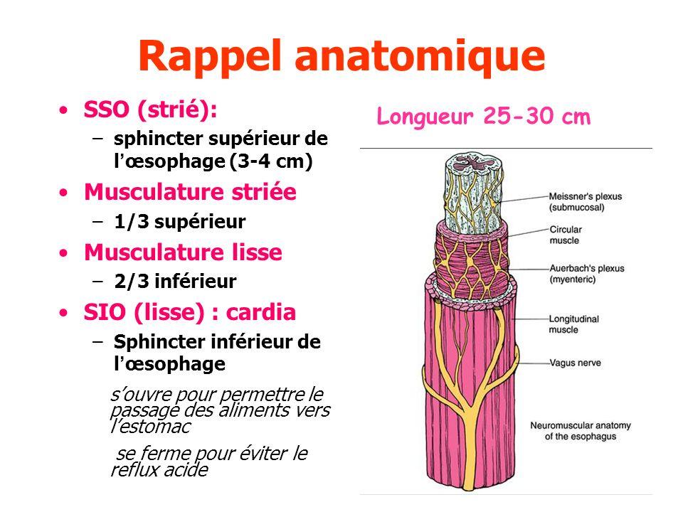 Rappel anatomique SSO (strié): Longueur 25-30 cm Musculature striée