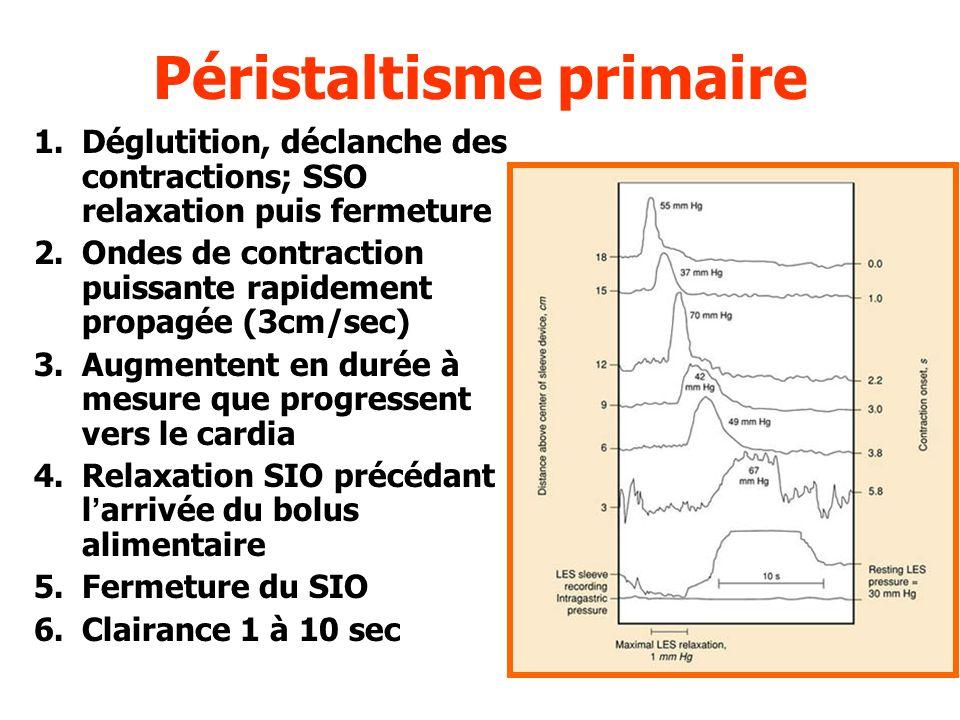 Péristaltisme primaire