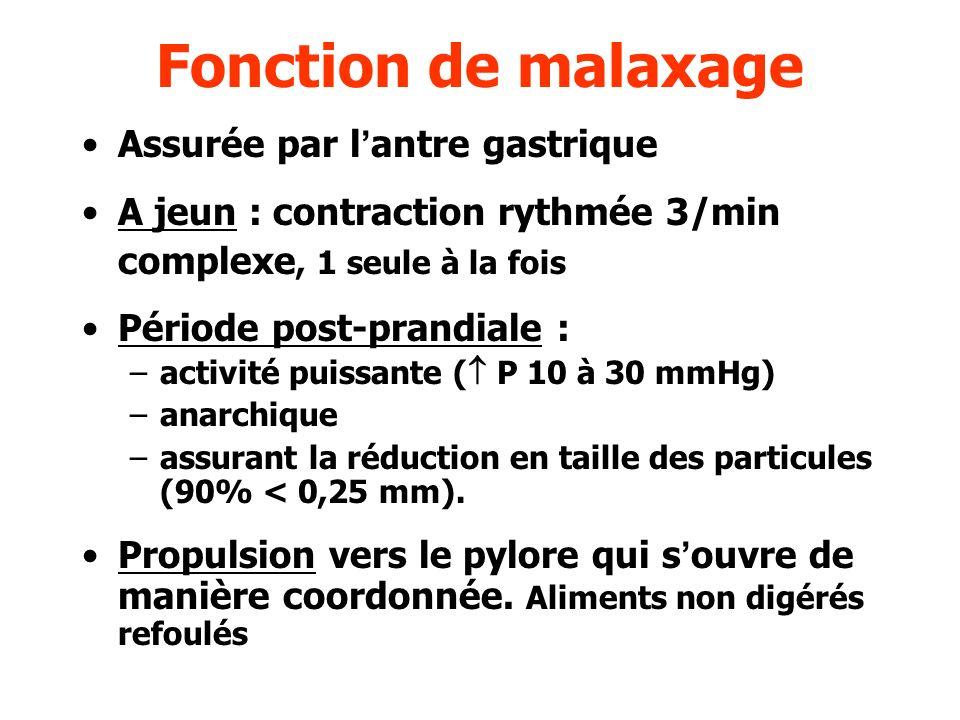 Fonction de malaxage Assurée par l'antre gastrique
