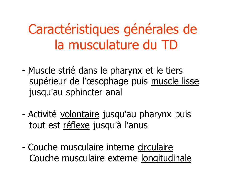 Caractéristiques générales de la musculature du TD