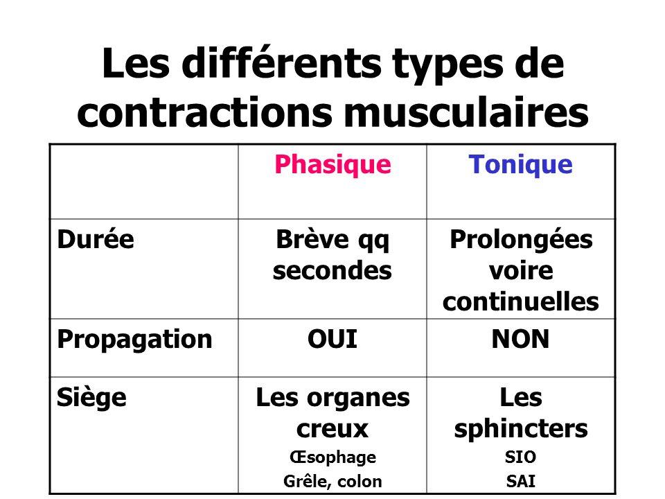 Les différents types de contractions musculaires