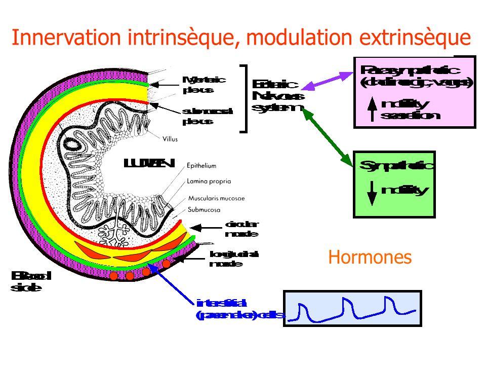 Innervation intrinsèque, modulation extrinsèque