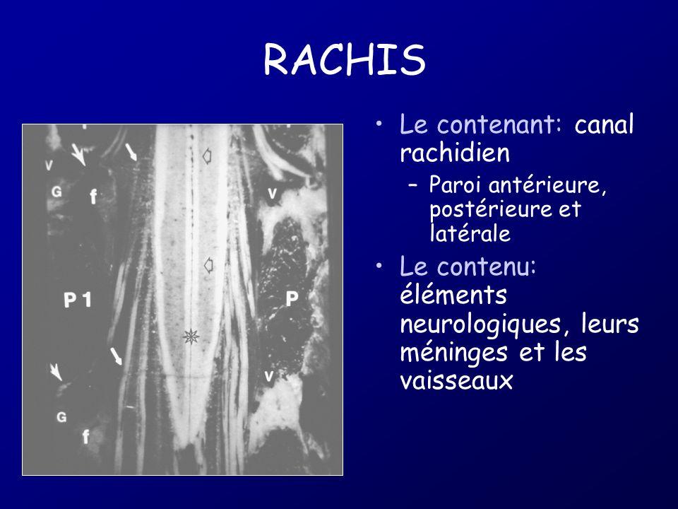 RACHIS Le contenant: canal rachidien