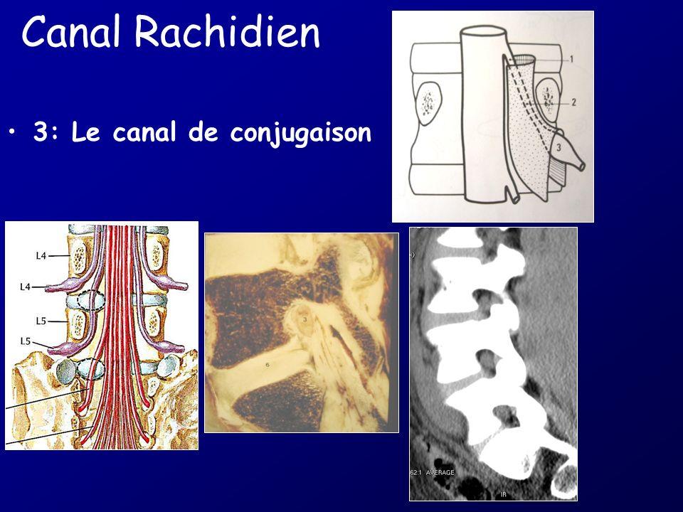 Canal Rachidien 3: Le canal de conjugaison