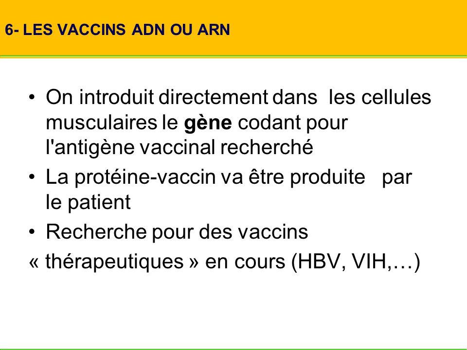 La protéine-vaccin va être produite par le patient