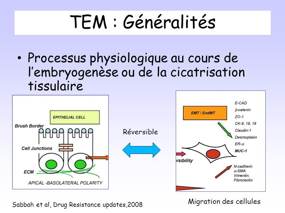 TEM : Généralités Processus physiologique au cours de l'embryogenèse ou de la cicatrisation tissulaire.