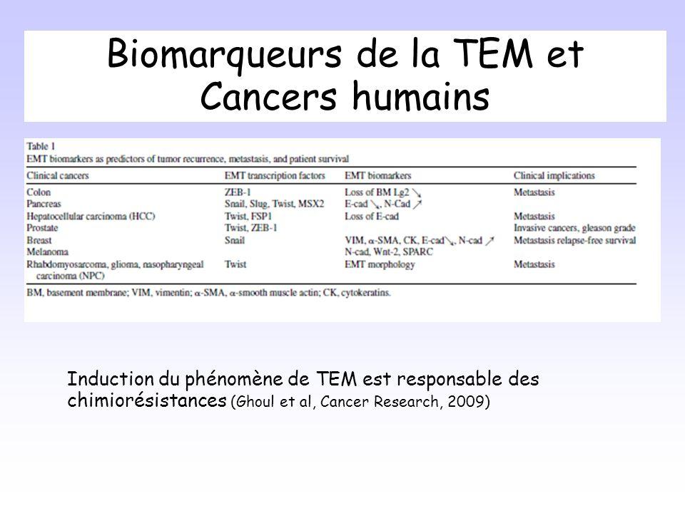Biomarqueurs de la TEM et Cancers humains