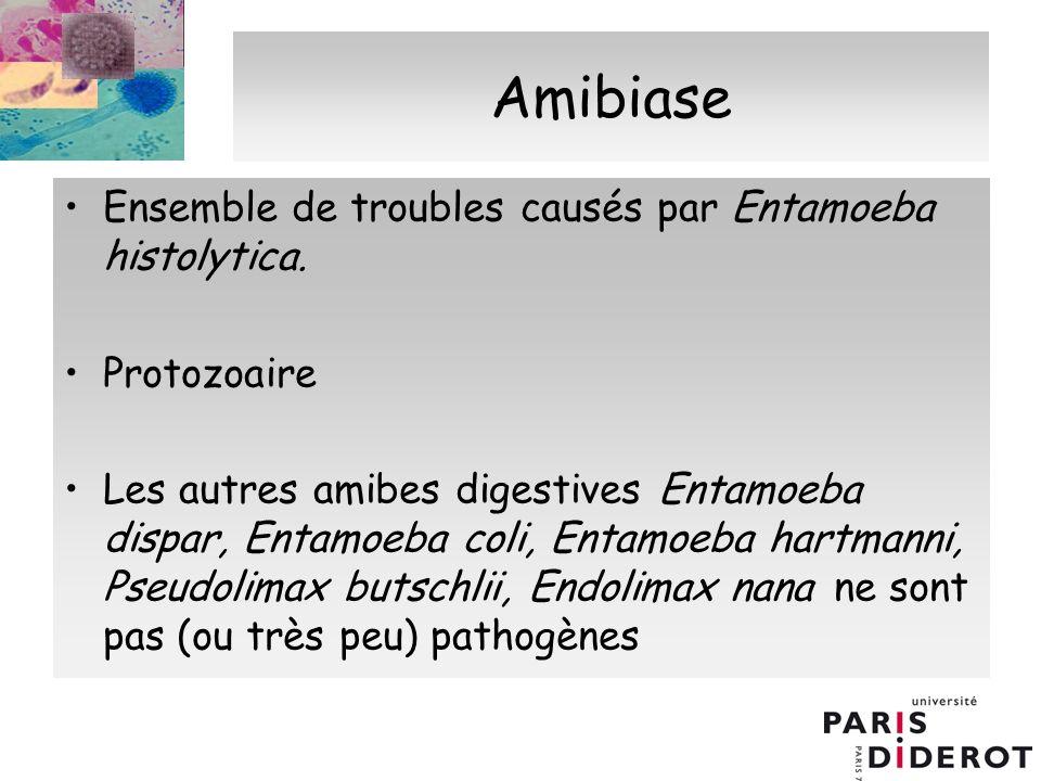 Amibiase Ensemble de troubles causés par Entamoeba histolytica.