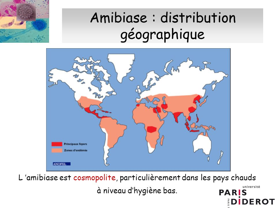 Amibiase : distribution géographique