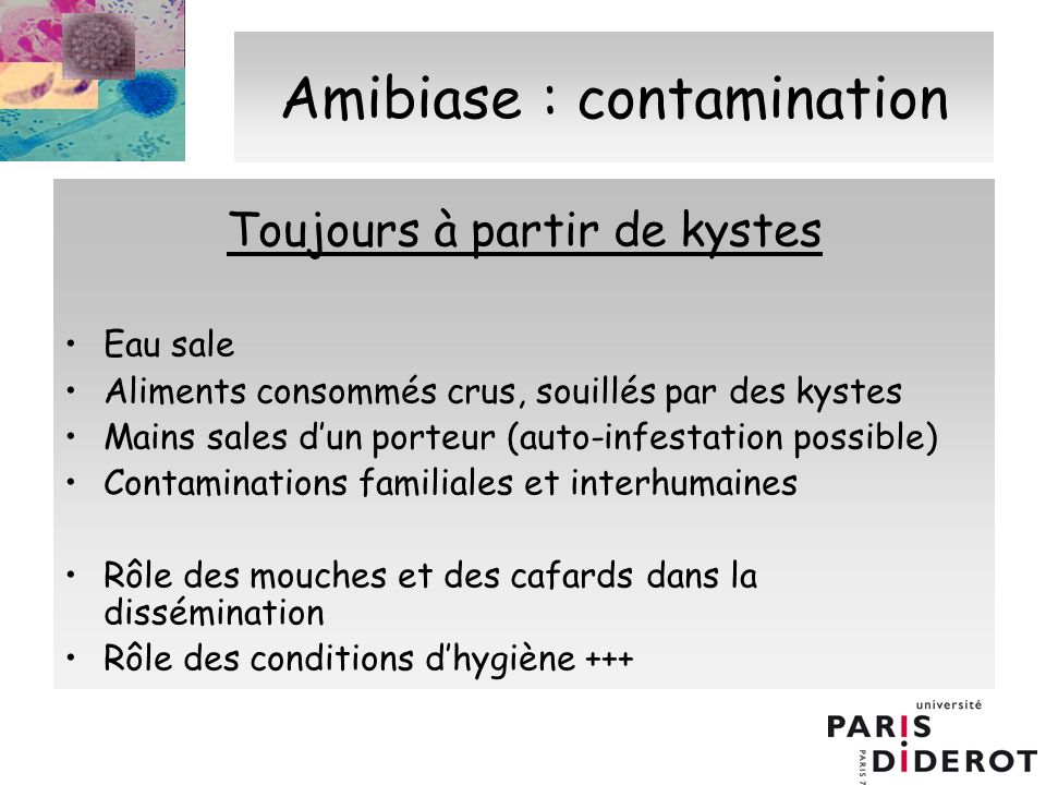 Amibiase : contamination
