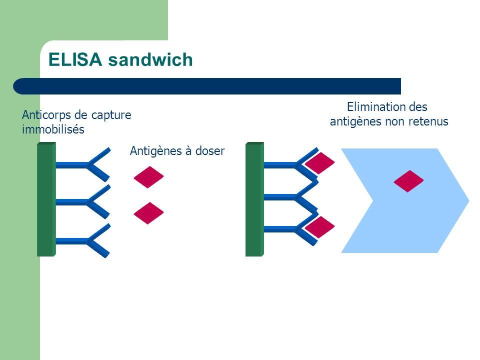 ELISA sandwich 1ère étape d 'incubation immunologique Elimination des