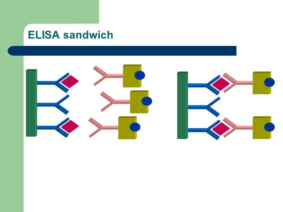 ELISA sandwich 2ème étape d 'incubation immunologique