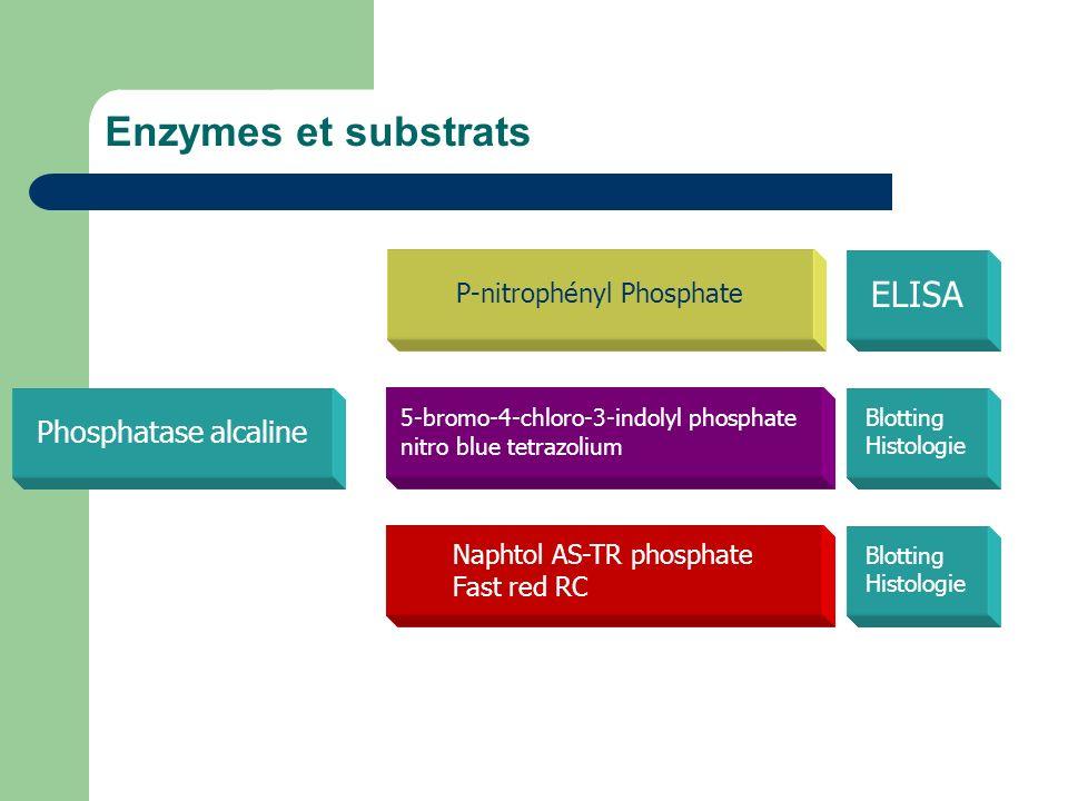Enzymes et substrats ELISA Phosphatase alcaline