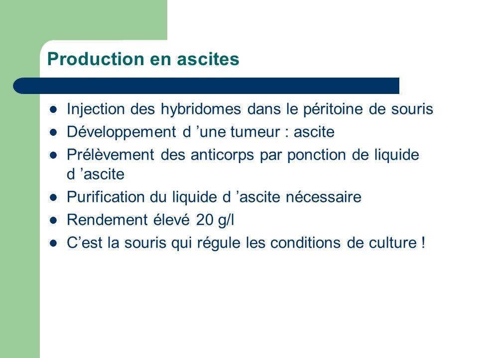 Production en ascites Injection des hybridomes dans le péritoine de souris. Développement d 'une tumeur : ascite.