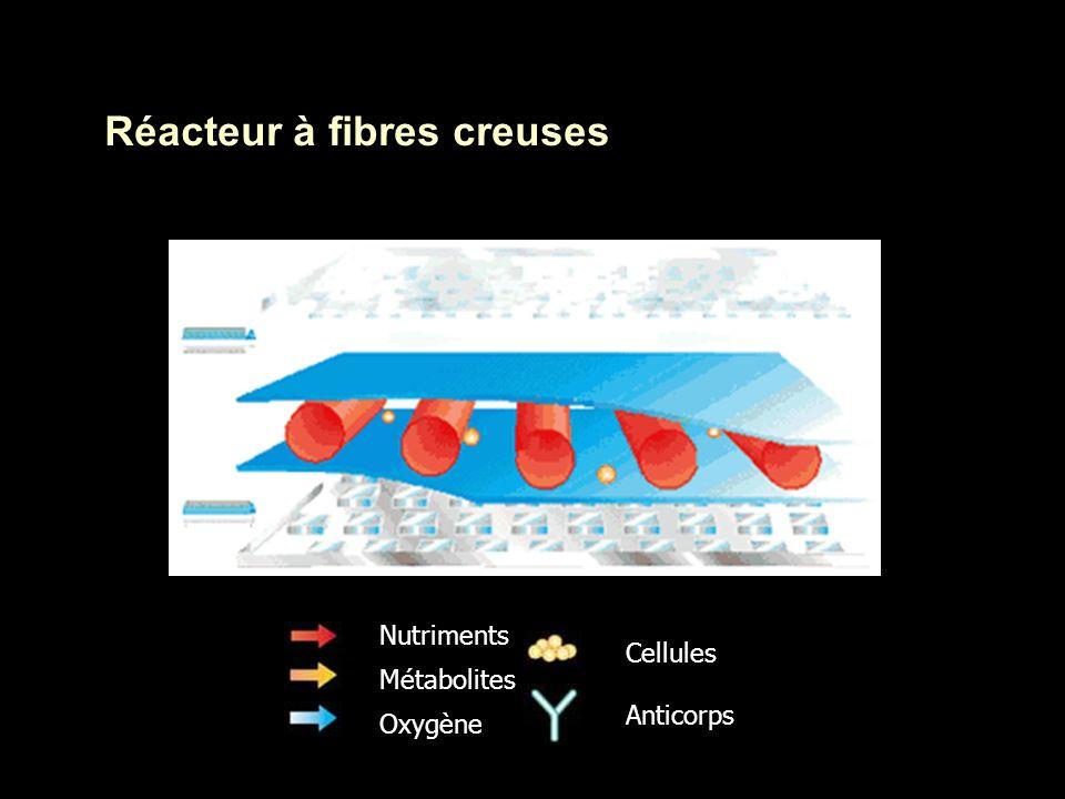 Réacteur à fibres creuses