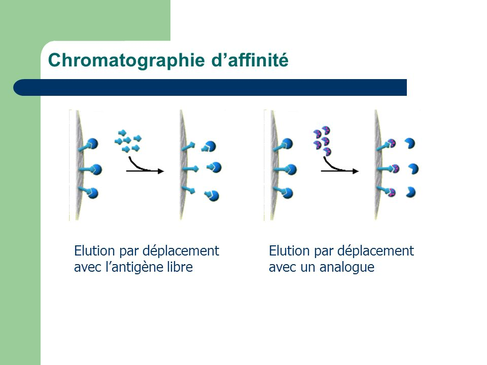 Chromatographie d'affinité