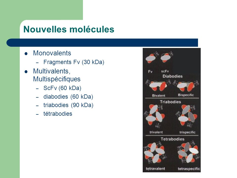 Nouvelles molécules Monovalents Multivalents, Multispécifiques