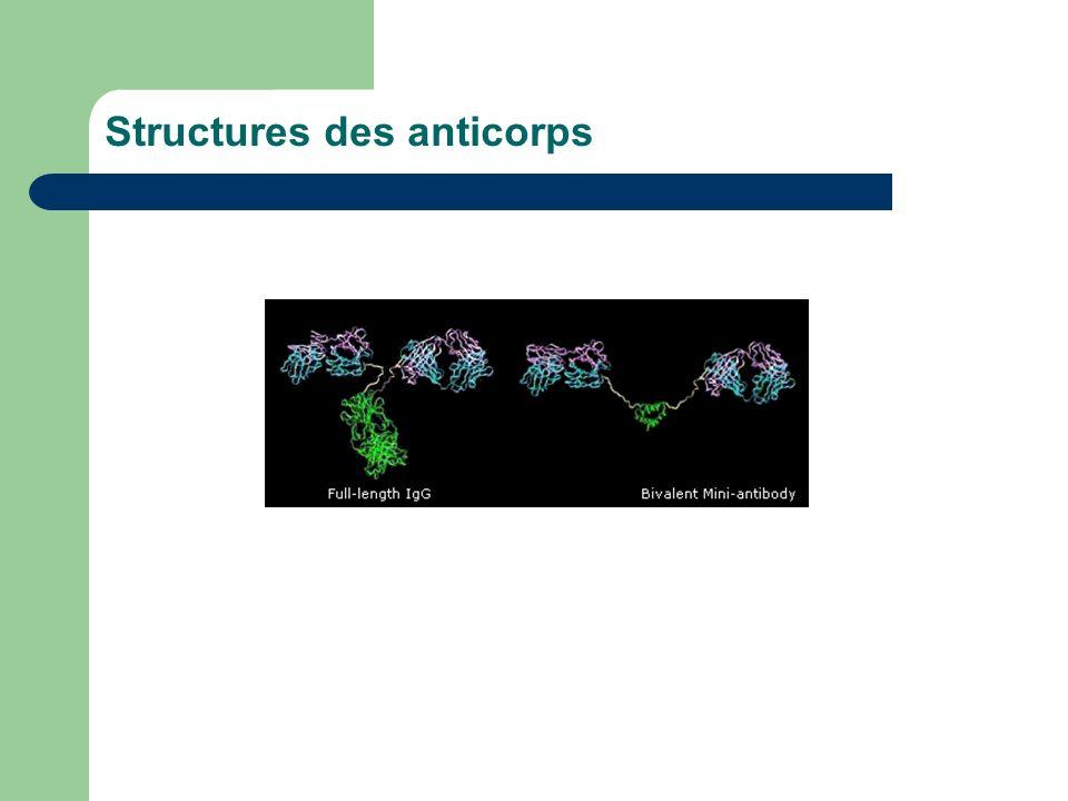 Structures des anticorps