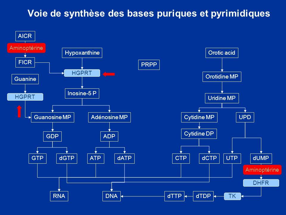 Voie de synthèse des bases puriques et pyrimidiques