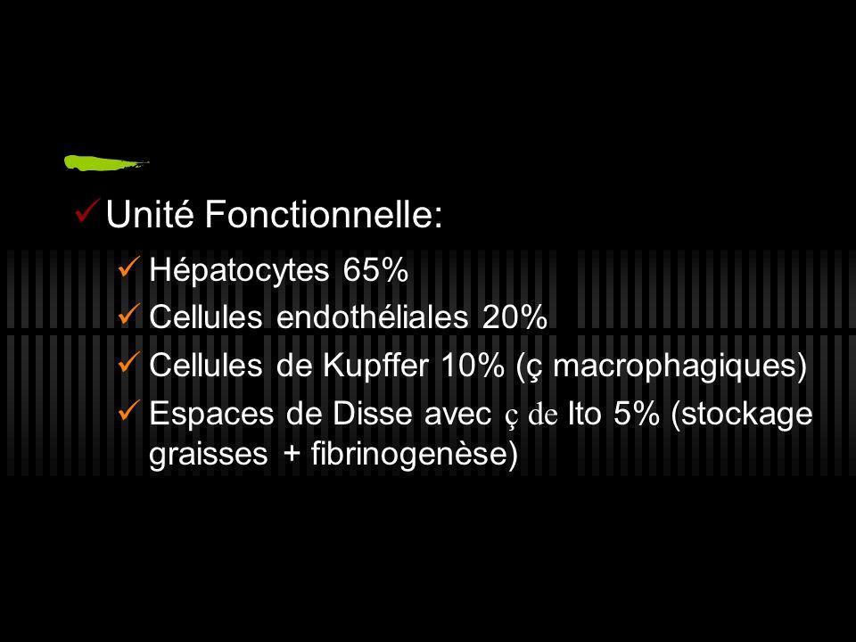 Unité Fonctionnelle: Hépatocytes 65% Cellules endothéliales 20%