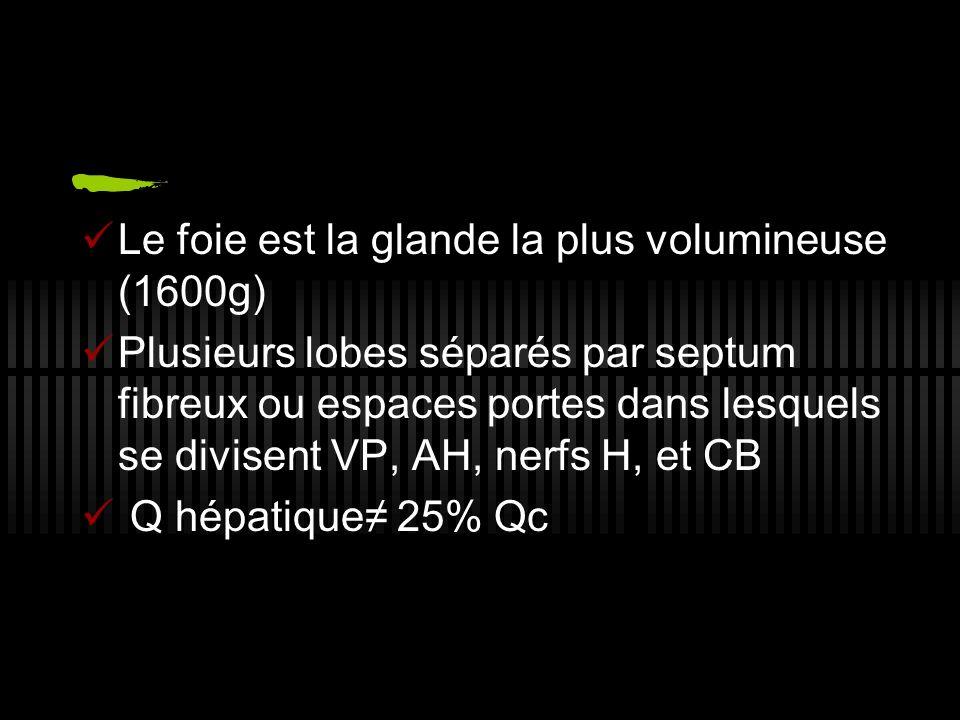 Le foie est la glande la plus volumineuse (1600g)
