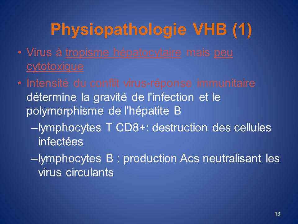 Physiopathologie VHB (1)