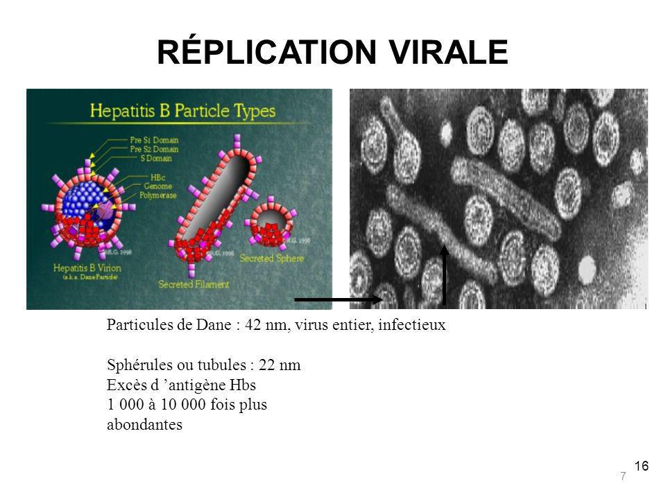 RÉPLICATION VIRALE Particules de Dane : 42 nm, virus entier, infectieux. Sphérules ou tubules : 22 nm.