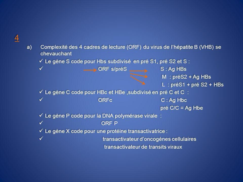 4 Complexité des 4 cadres de lecture (ORF) du virus de l'hépatite B (VHB) se chevauchant.