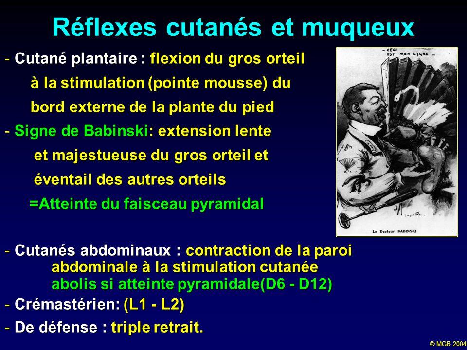 Réflexes cutanés et muqueux