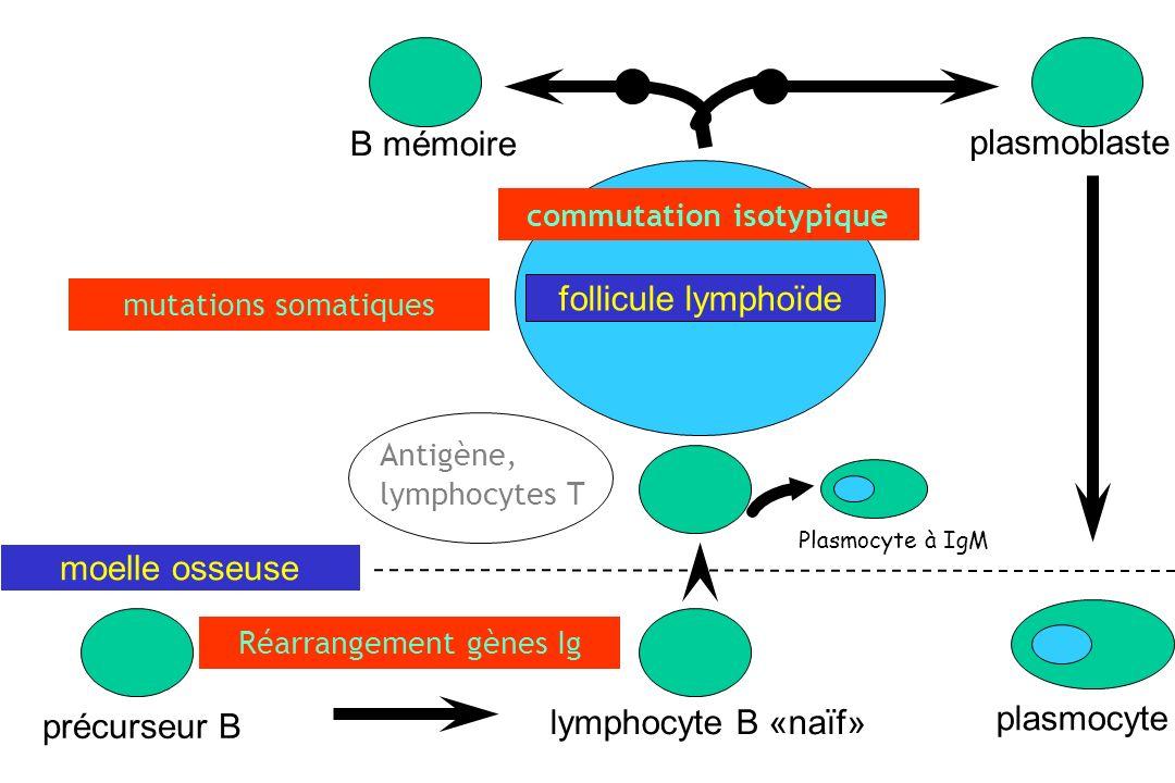 commutation isotypique