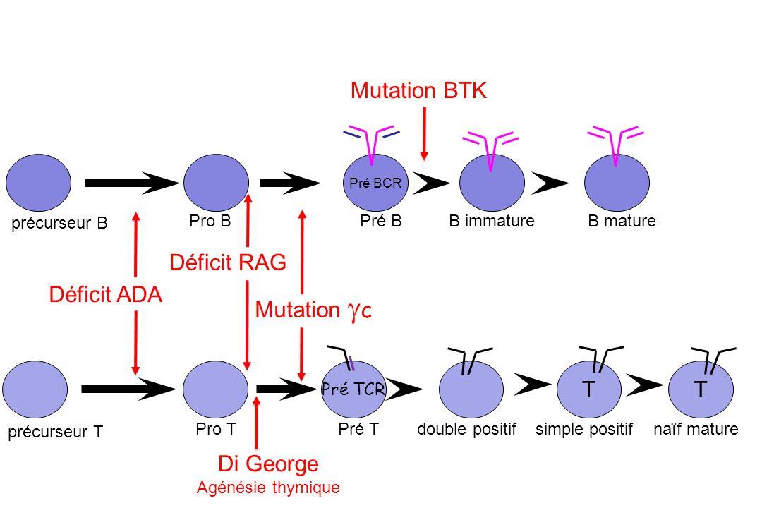 Mutation BTK Déficit RAG Déficit ADA Mutation gc T T Di George