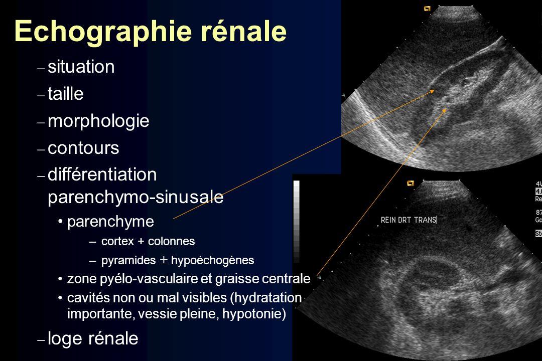 Echographie rénale situation taille morphologie contours