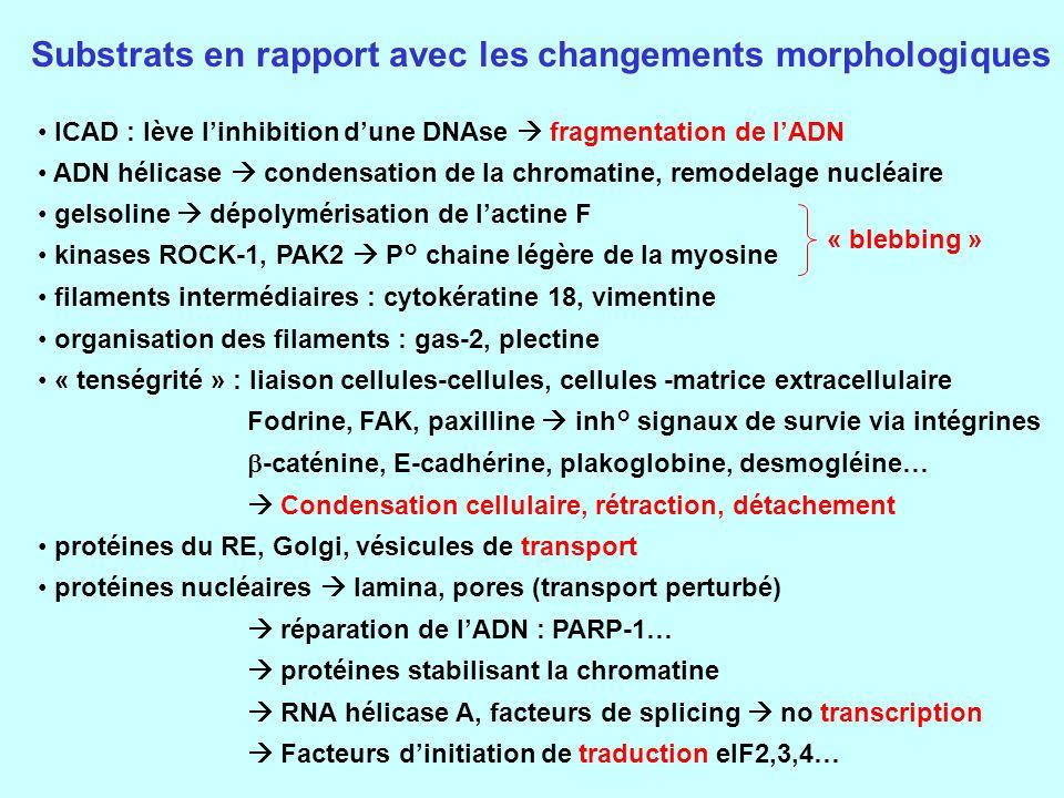Substrats en rapport avec les changements morphologiques
