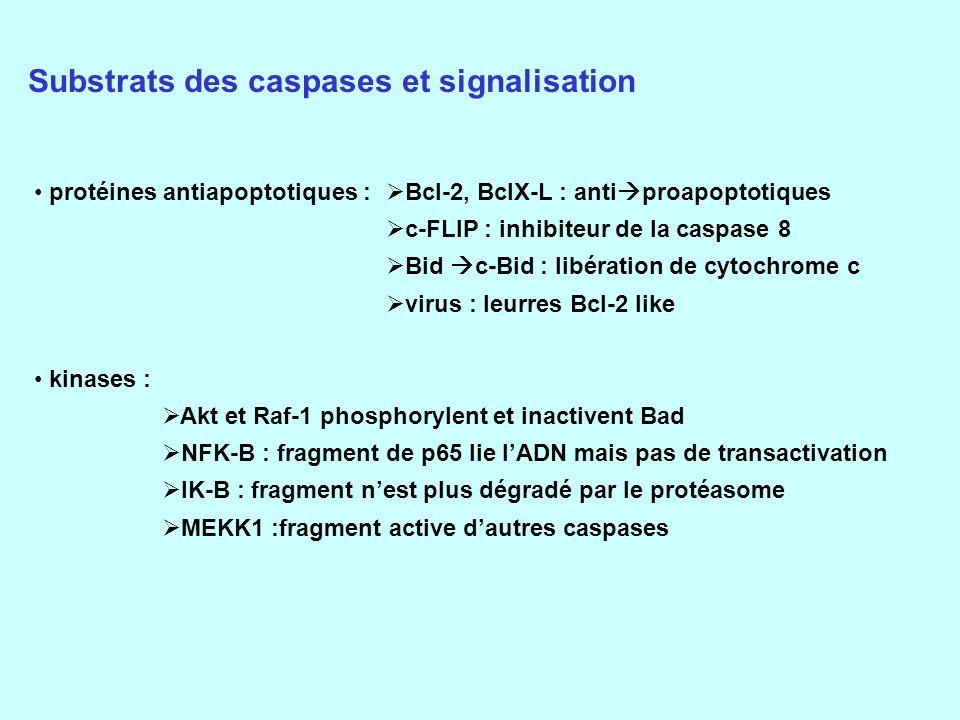 Substrats des caspases et signalisation
