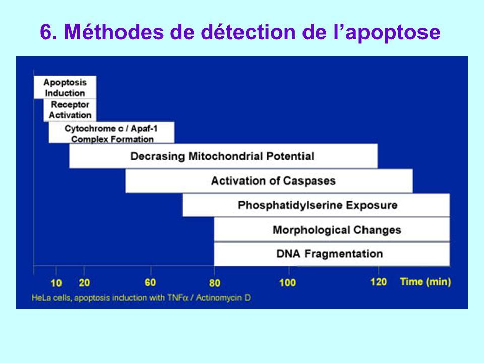6. Méthodes de détection de l'apoptose