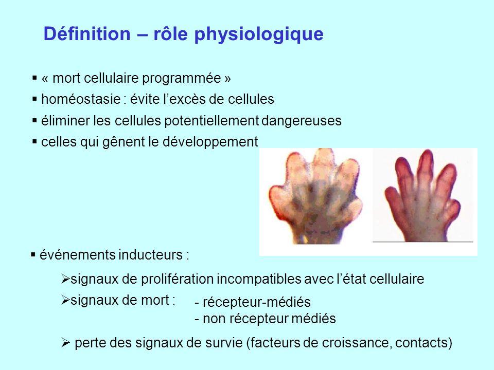 Définition – rôle physiologique
