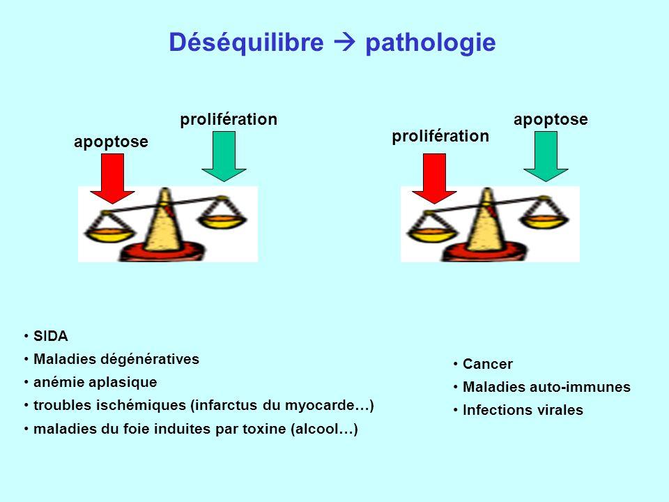 Déséquilibre  pathologie
