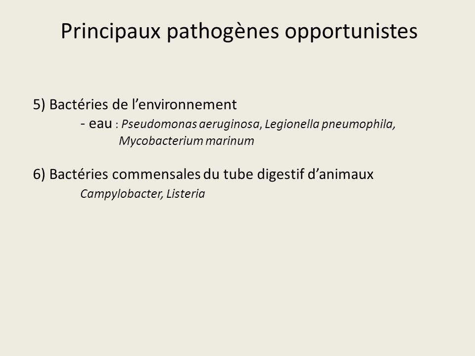Principaux pathogènes opportunistes