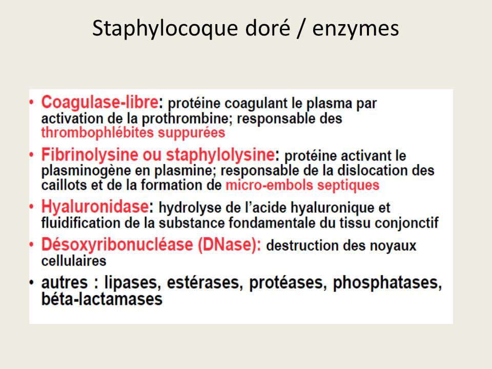 Staphylocoque doré / enzymes