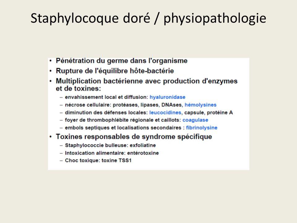 Staphylocoque doré / physiopathologie