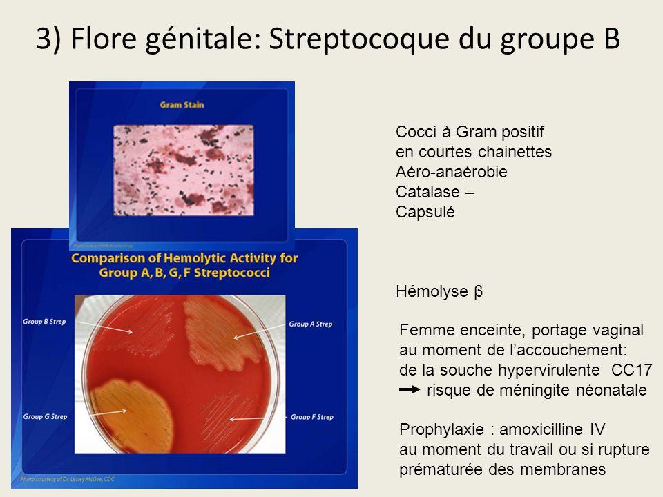 3) Flore génitale: Streptocoque du groupe B