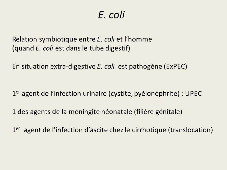 E. coli Relation symbiotique entre E. coli et l'homme