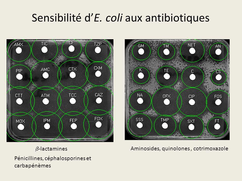 Sensibilité d'E. coli aux antibiotiques