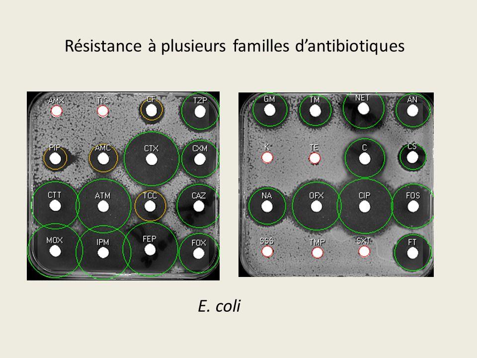 Résistance à plusieurs familles d'antibiotiques