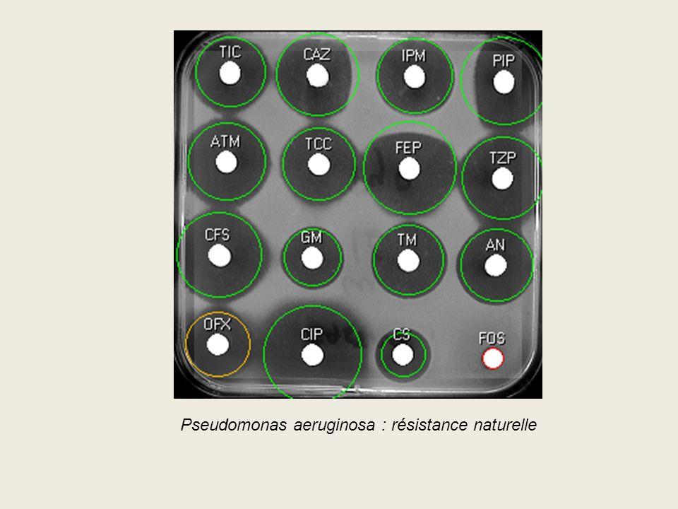 Pseudomonas aeruginosa : résistance naturelle